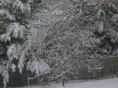 Snow on another tree
