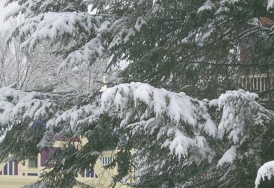More tree, more snow